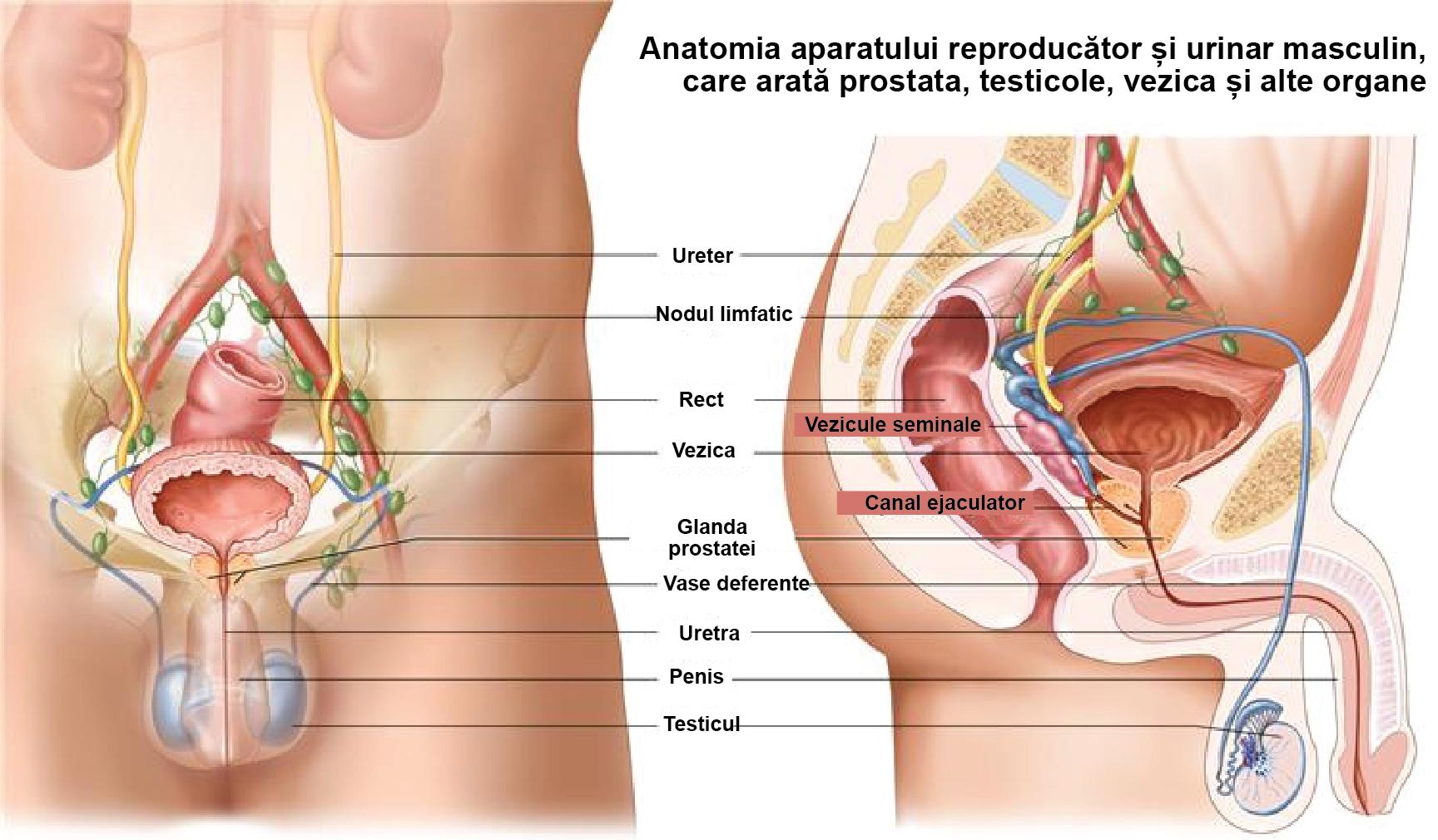 este o alimentatie sanatoasa pentru cei ce sufera de prostata